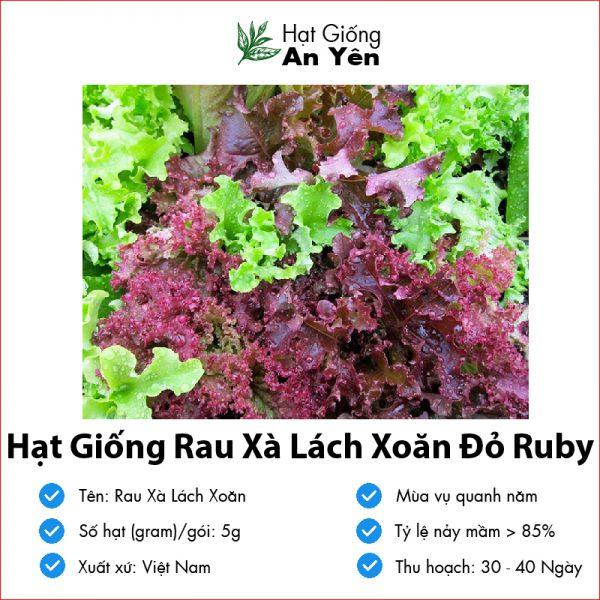 Hat-giong-rau-xa-lach-do-ruby-07