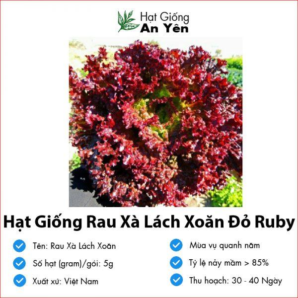 Hat-giong-rau-xa-lach-do-ruby-08