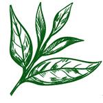 logo hat giong an yen shop