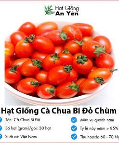 Hat-giong-ca-chua-bi-do-01