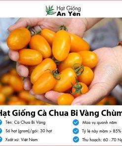 Hat-giong-ca-chua-bi-vang-01