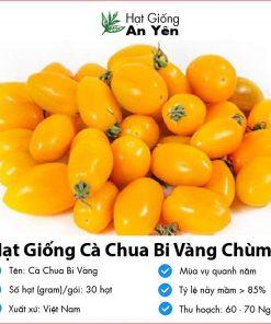 Hat-giong-ca-chua-bi-vang-08