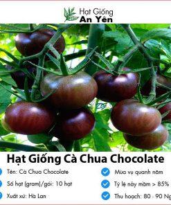 Hat-giong-ca-chua-chocolate-01
