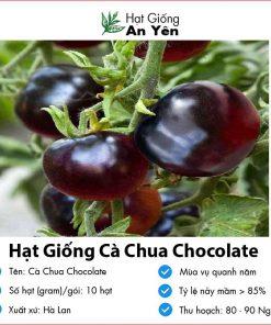 Hat-giong-ca-chua-chocolate-04