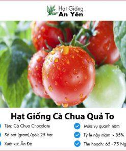Hat-giong-ca-chua-qua-to-03