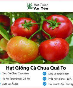 Hat-giong-ca-chua-qua-to-06