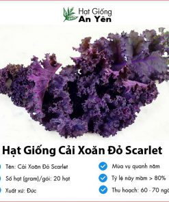 Hat-giong-cai-xoan-do-scarlet-02