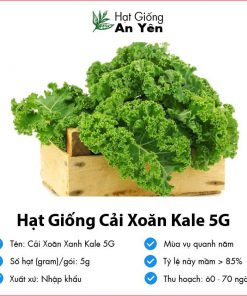 Hat-giong-cai-xoan-xanh-kale-5g-01