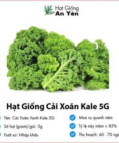 Hat-giong-cai-xoan-xanh-kale-5g-05