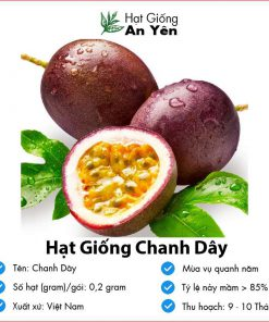 Hat-giong-chanh-day-07