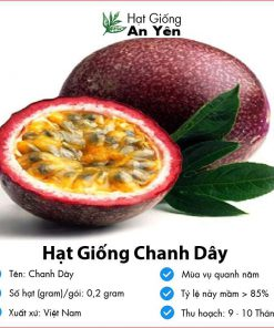 Hat-giong-chanh-day-08