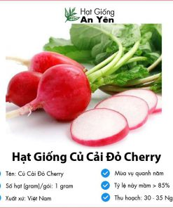 Hat-giong-cu-cai-do-cherry-08
