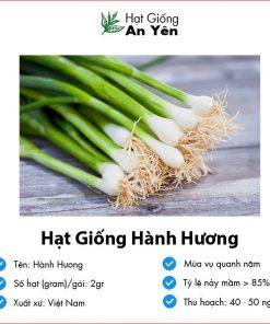 Hat-giong-hanh-huong-07