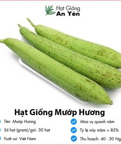 Hat-giong-muop-huong-08