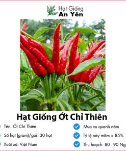Hat-giong-ot-chi-thien-07