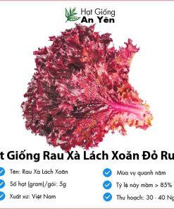 Hat-giong-rau-xa-lach-do-ruby-01